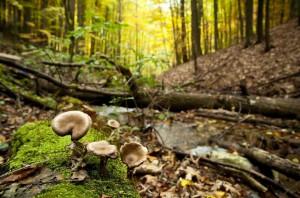 ždánský les